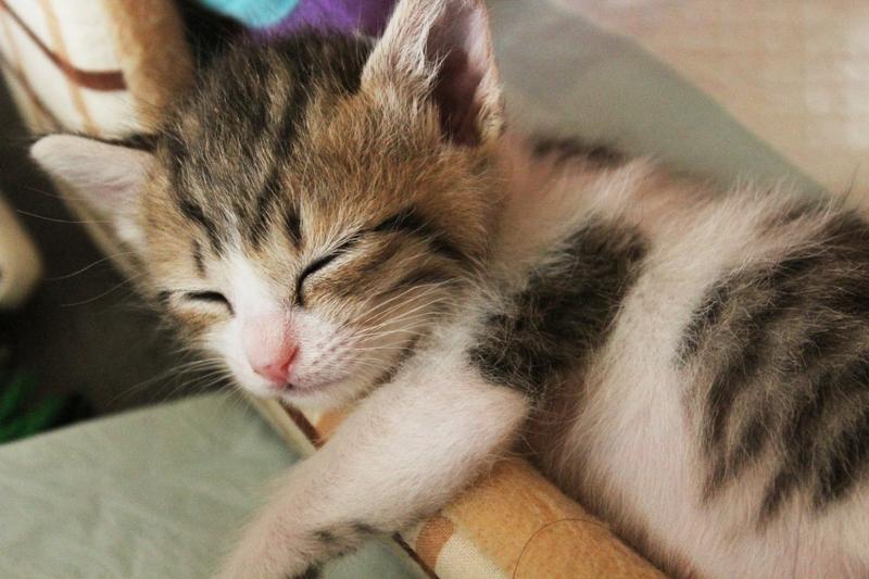 一流の人が実践する、仕事のパフォーマンスを上げるための「究極の睡眠術」